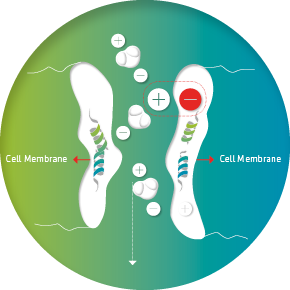 Cell without electromagnetic radiation