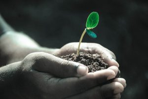 Cupped hands holding dirt with a small sprout growing out of it.