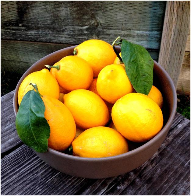 Healthy Fruits in Winter 5