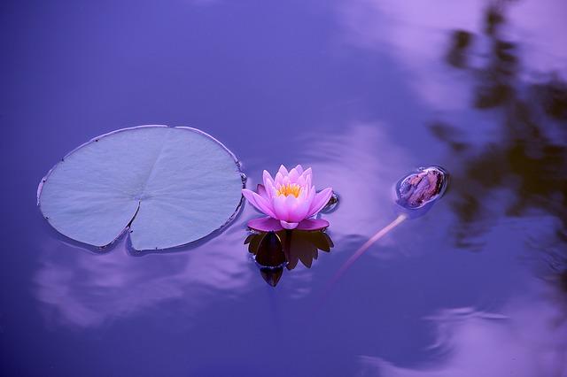 Hanmi Buddhist Spiritual Healing Services – Wednesday afternoons