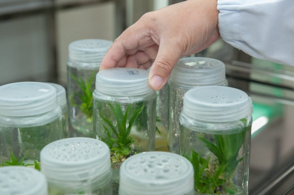 Plant cultures in a lab